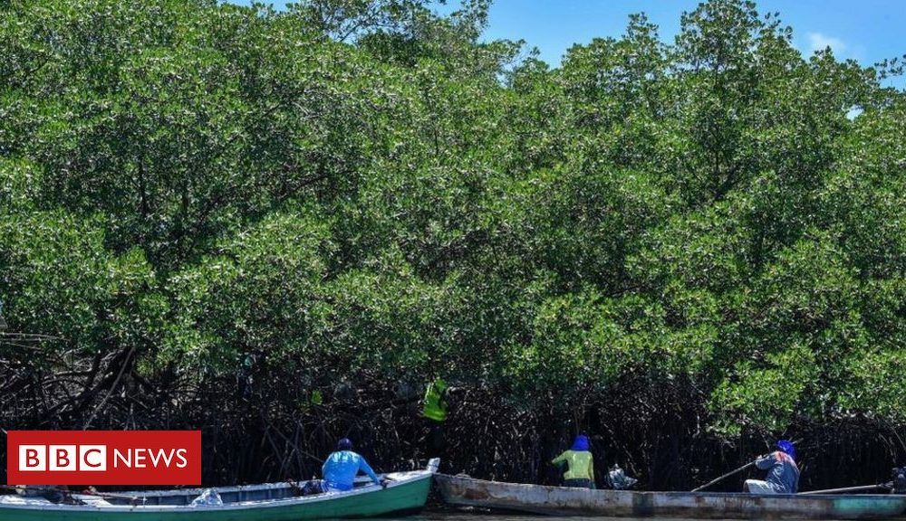 Anger as Brazil revokes mangrove protection regulations